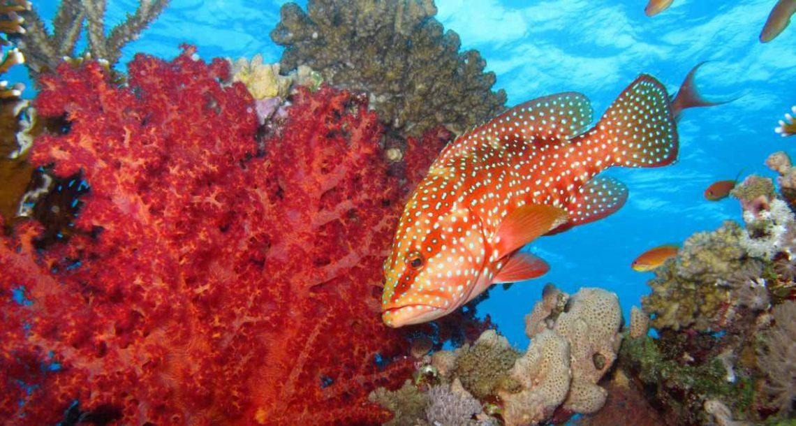 צלילה בדהב ובאזור